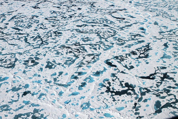 The thinning of Arctic sea ice has increased the number of melt ponds — dark pools of water on the ice surface — and permitted enough sunlight to penetrate to the ocean water that phytoplankton has been blooming under the ice.
