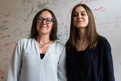 Stanley Center member Paola Arlotta (left) andpostdoctoral fellow Giorgia Quadratohave produced long-cultured brain organoids that have the potential to advance our understanding of brain development and disorders.
