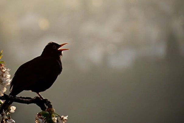 A new study finds that the inherent complexity in birdsongs might actually be the result of a simple, controllable instability in the structure of the specialized organ used to create song.