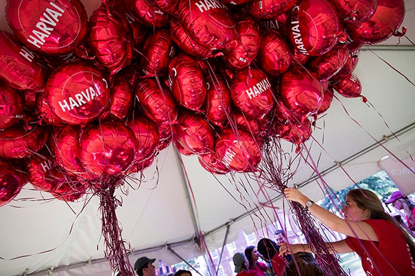 Early on move-in day, Jessika Nebrat '18 gathers balloons to mark the freshmen residences in Harvard Yard.