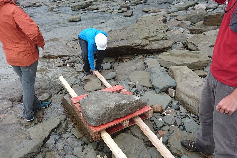 A Harvard paleontology team prepares to move a heavy fossil across a rocky beach in Nova Scotia.