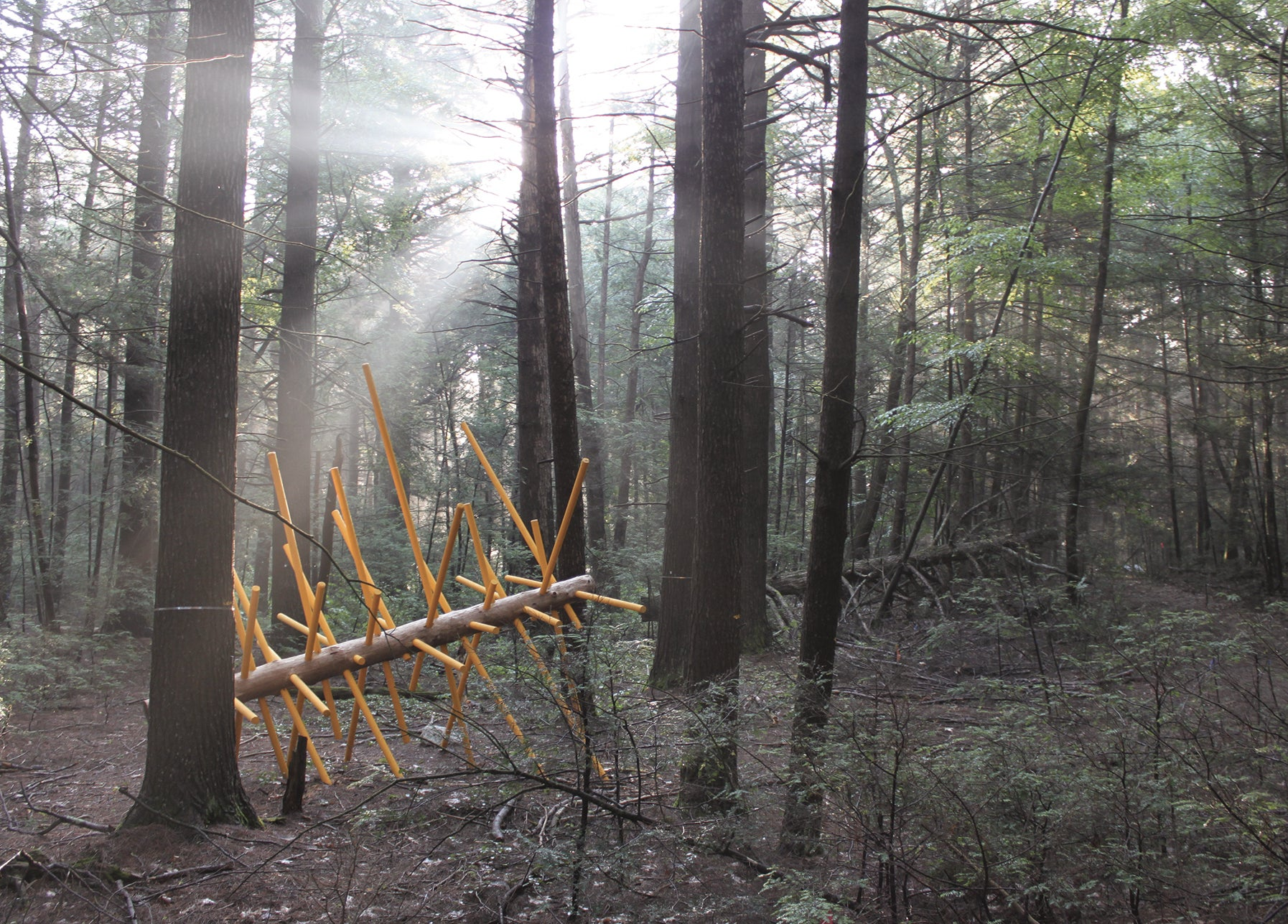 Exchange Tree by David Buckley Borden is one of 12 Hemlock Hospice installations at Harvard Forest.