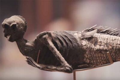 The Feejee Mermaid has haunted the Peabody Museum of Archaeology and Ethnology for more than 100 years. Video still by Kai-Jae Wang/Harvard Staff