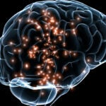 Harvard scientists are among those who will receive more than $150 million in funding over the next five years through the National Institute of Health's Brain Research through Advancing Innovative Neurotechnologies (BRAIN) Initiative. This marks part of an effort to gain insight into the workings of the brain.