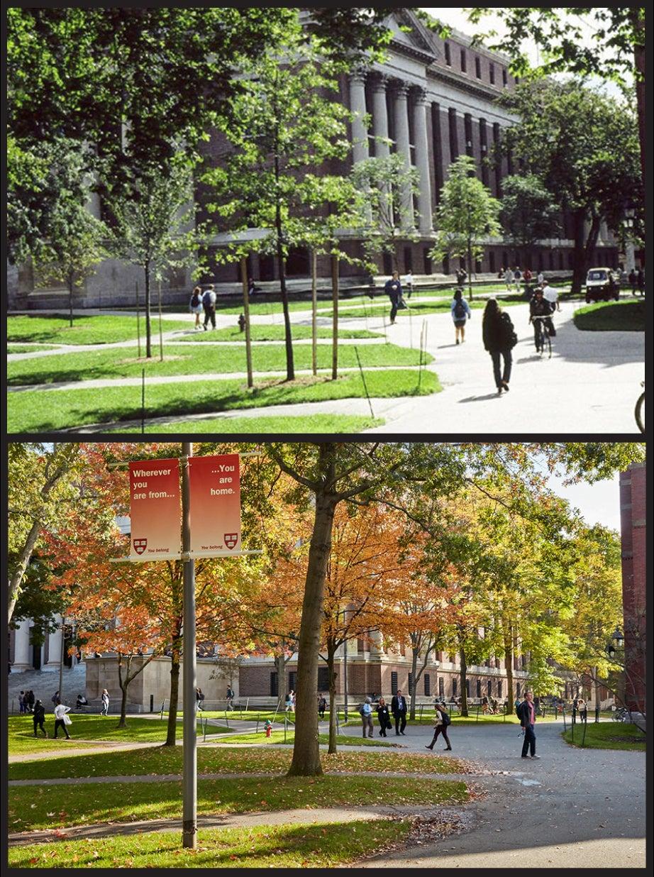 Widener Library, 1990s vs. 2017