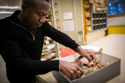 Barnabas Daru is lead author of a study that uncovered sampling biases in a number of herbarium collections around the world, casting doubt on their usefulness in evaluating climate change.