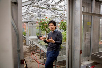 Kelsey Sakimoto, postdoctoral fellow with the Center for the Environment, is exploring how to use the sun to enrich soil with an artificial leaf and engineered bacteria.