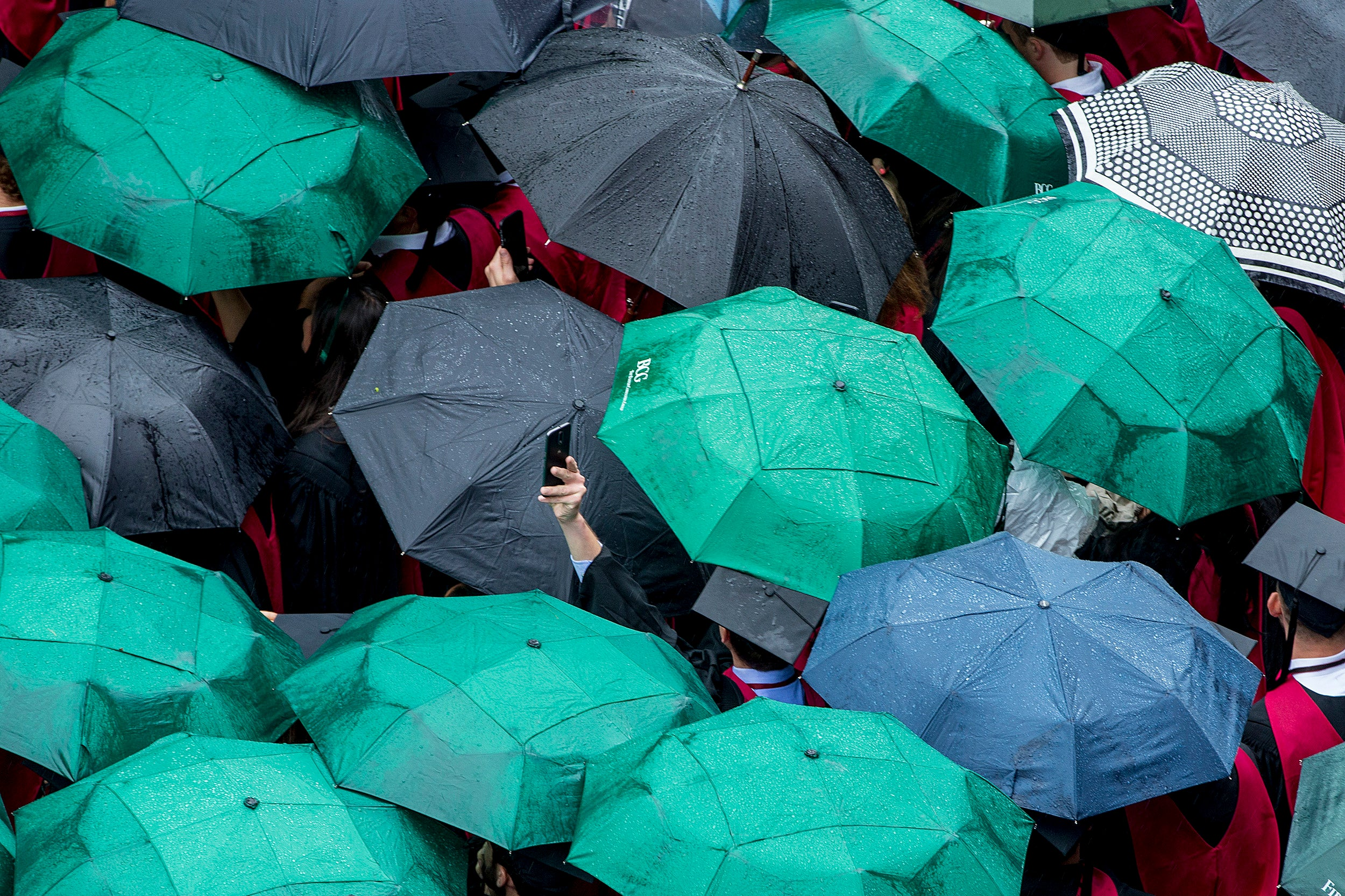 A Harvard graduate raises his phone to snap a picture above the umbrellas.