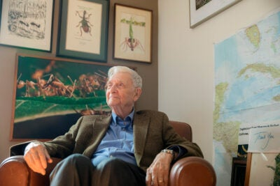 In his latest book, entomologist E.O. Wilson urges the next generation of great minds to evolve and explore the symmetry between the natural sciences and the humanities.