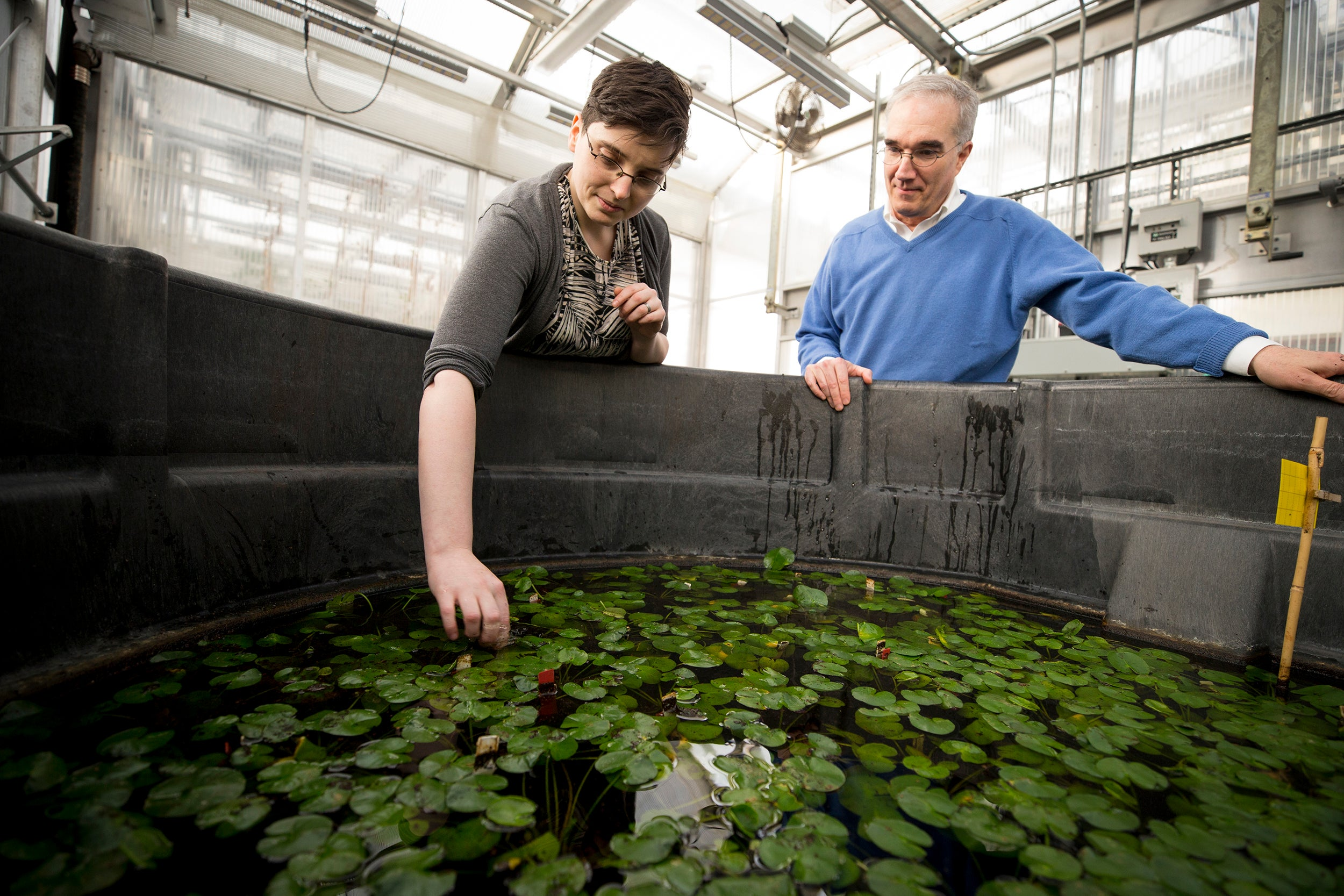 "Arnold Arboretum scientists Becky Povilus (left) and Ned Friedman  have pinpointed how mother plants of an extinct species of water lily take control of rearing offspring, which Povilus compared to ""locking Dad out of the kitchen."""