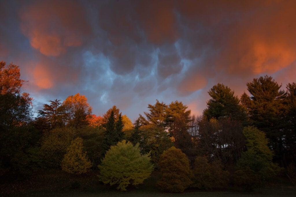 Fall foliage, orange sunset.