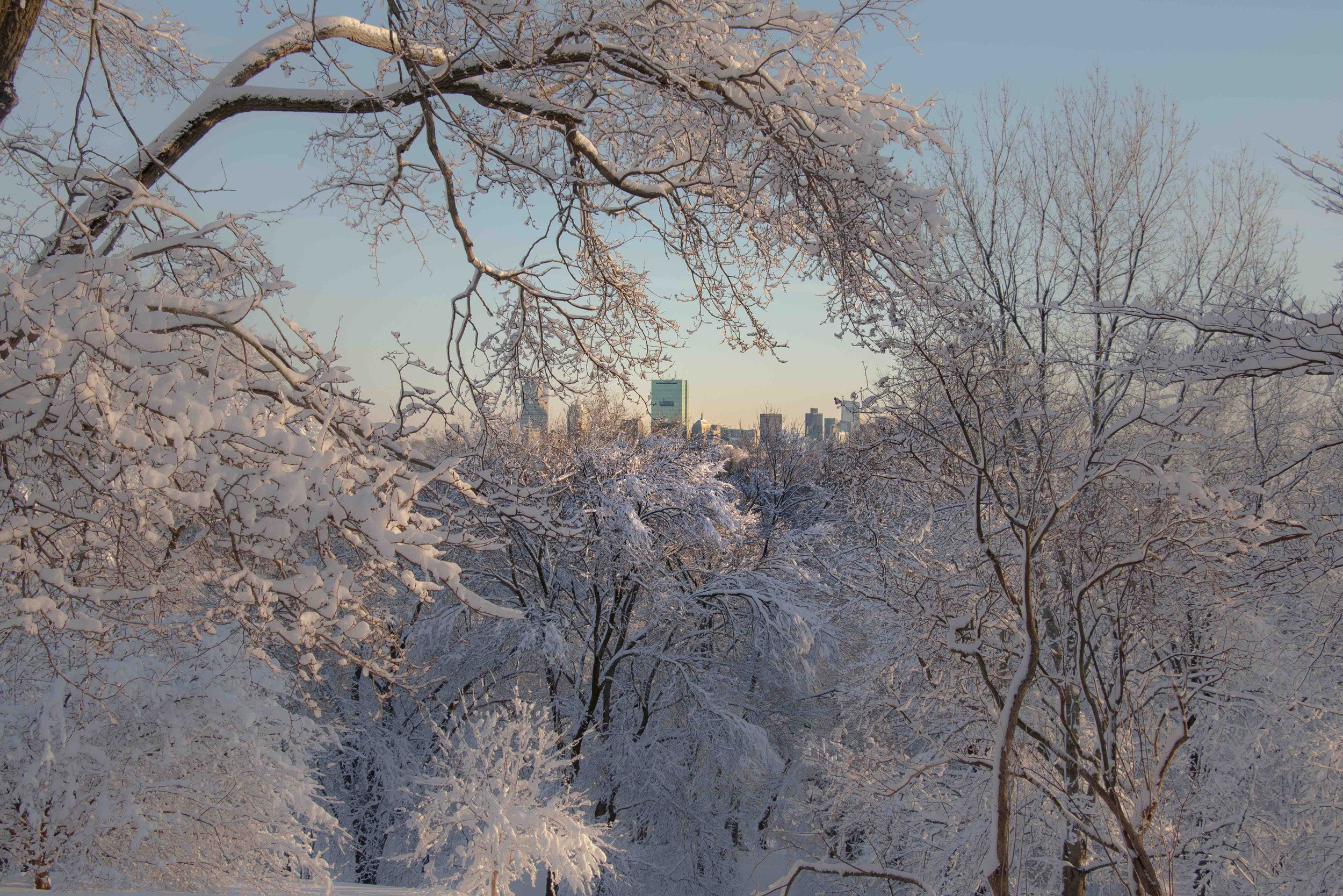 View of Boston skyline from snowy Arnold Arboretum.