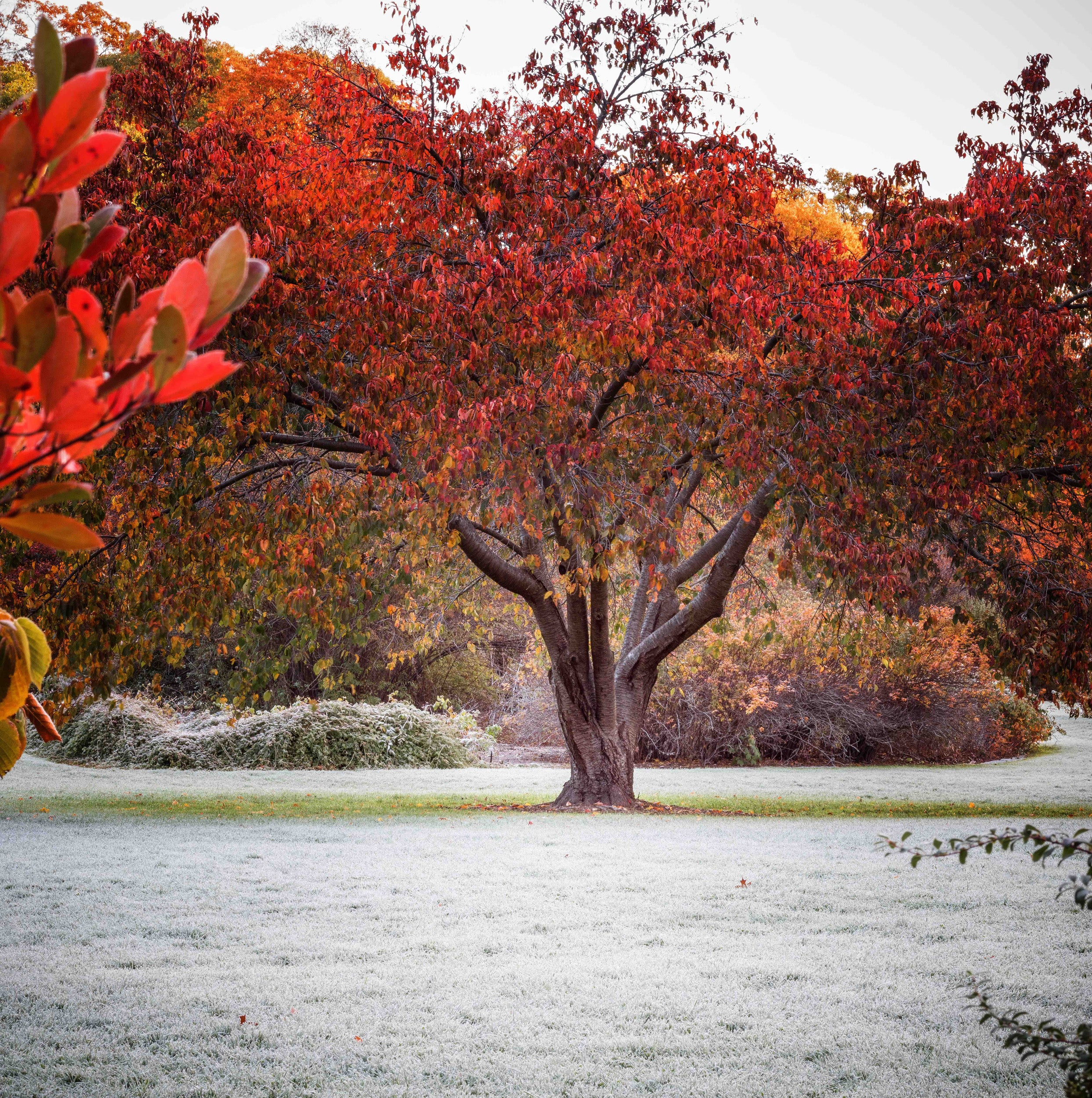 Bright red foliage.