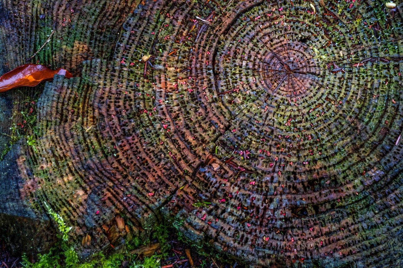 Colorful tree rings close up.