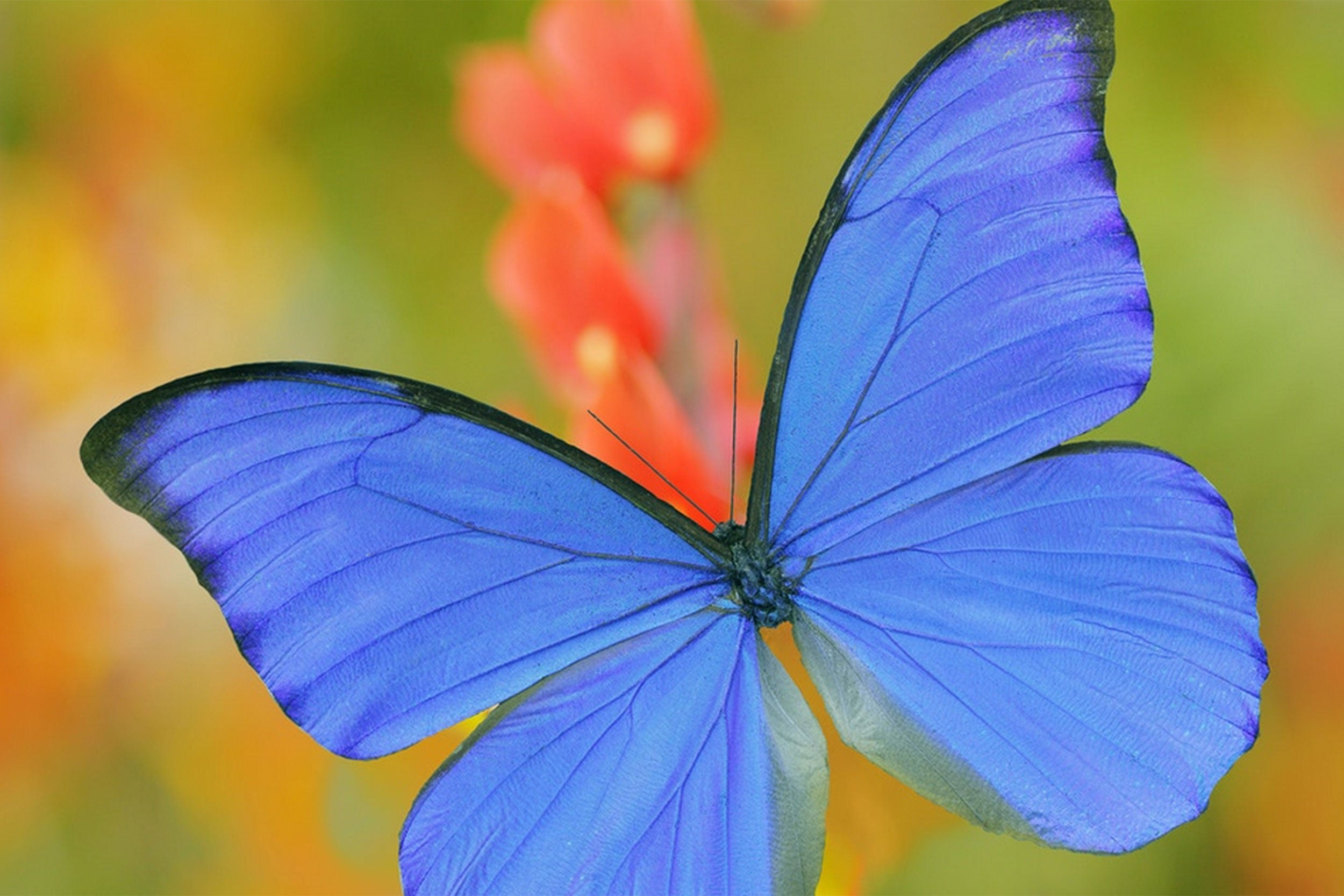 Butterfly Wings Inspire Air-purification Improvements ...