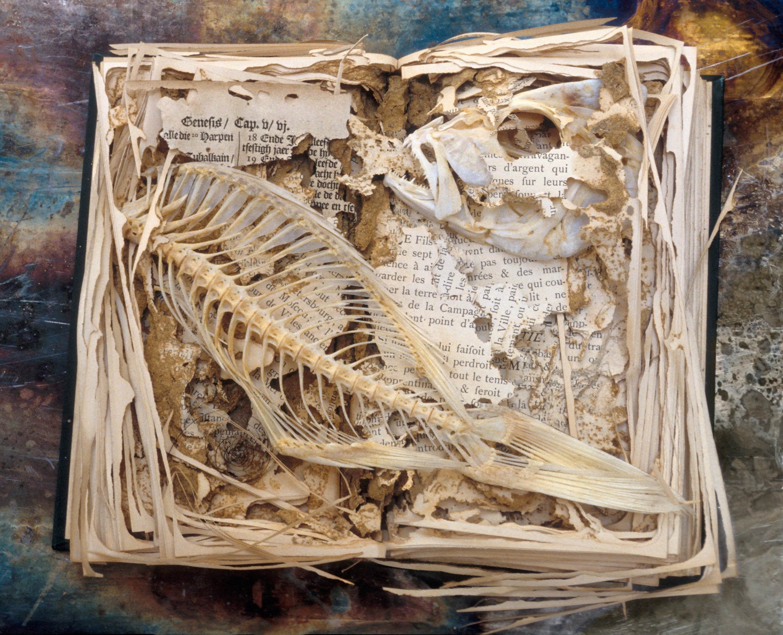 Fish bones placed on top of termite-damaged book.