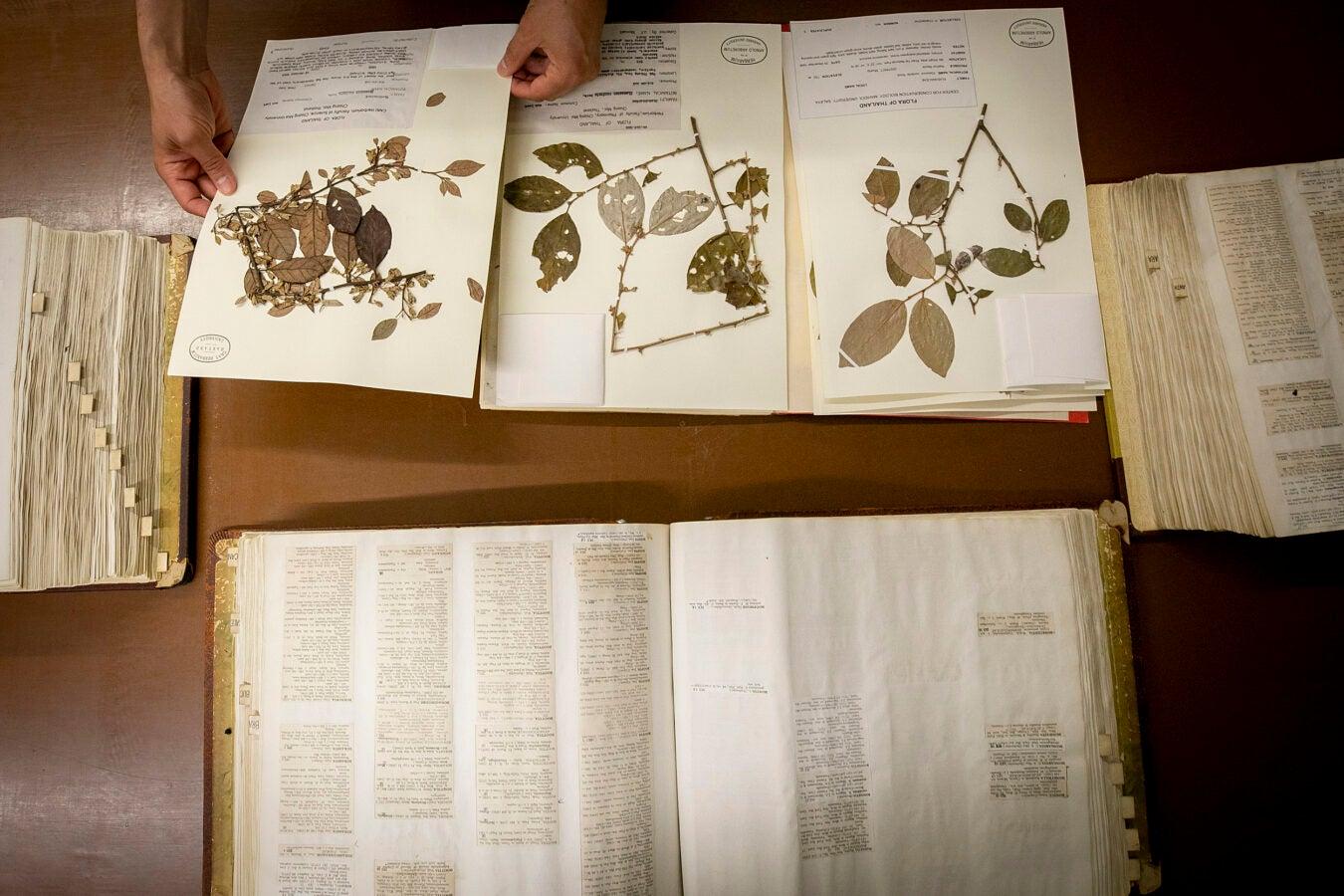 International Plant Names Index