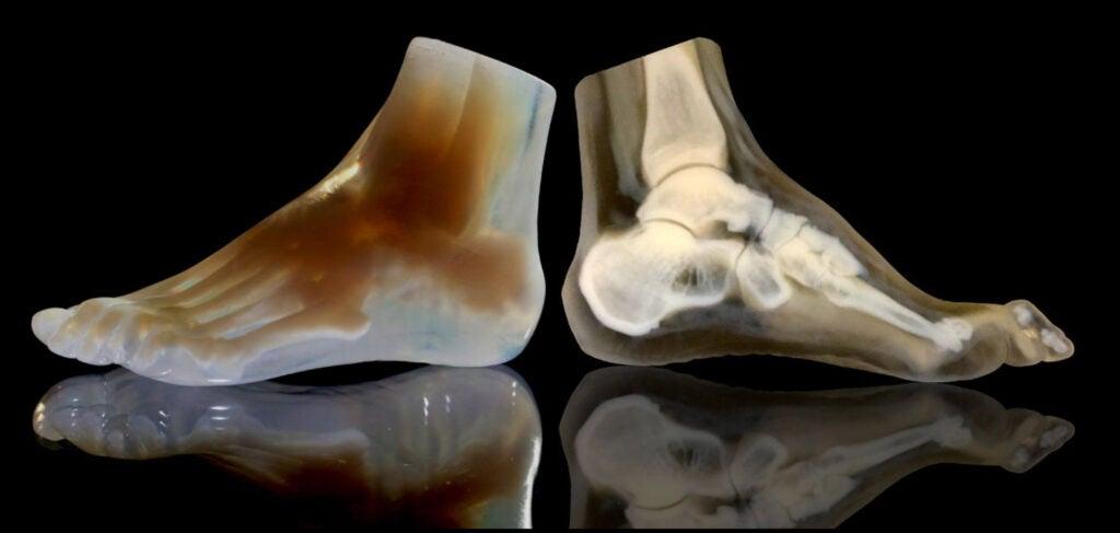 3-D model of a foot