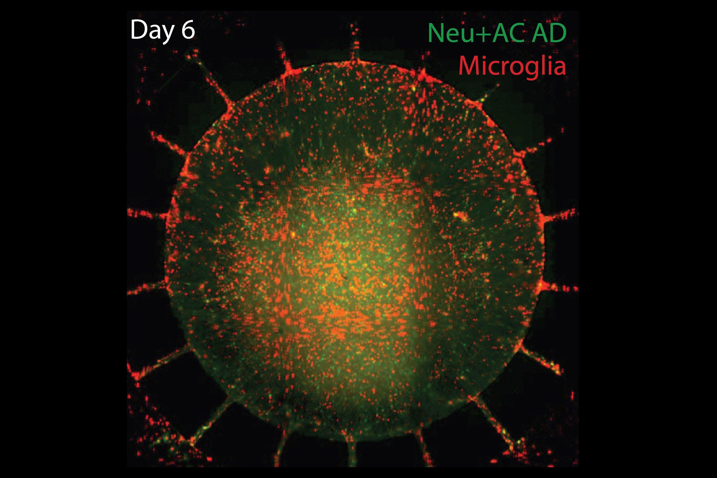 Nature Neurocells