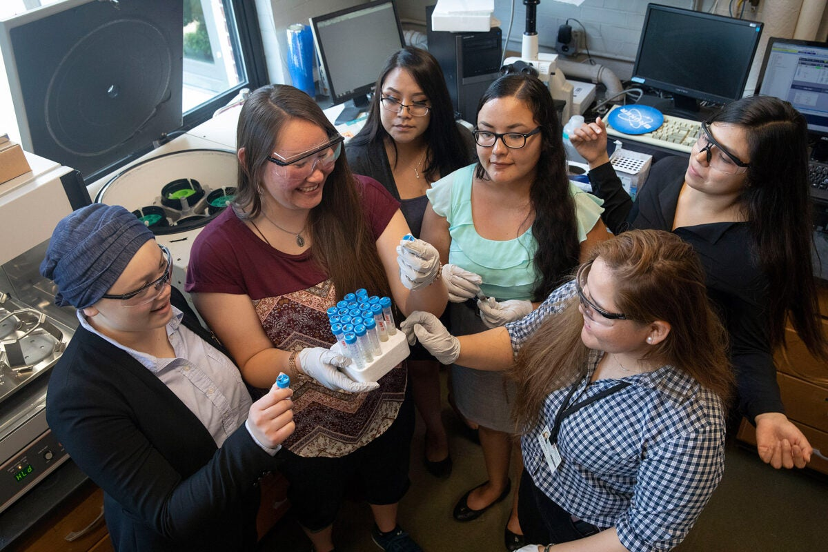 Native American undergrads Kylie Ray Lee (clockwise from left), Naomi Redfield, Racquel White, Trisheena Kills Pretty Enemy, Dominique Pablito, and Chelsea Draper took part in SEAS' Summer Research Experience program