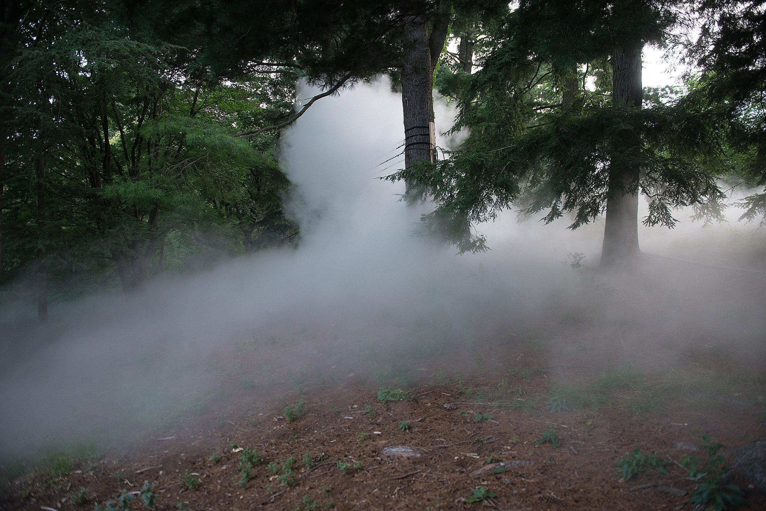 Fujiko Nakaya's Fog x Hill at the Arnold Arboretum.