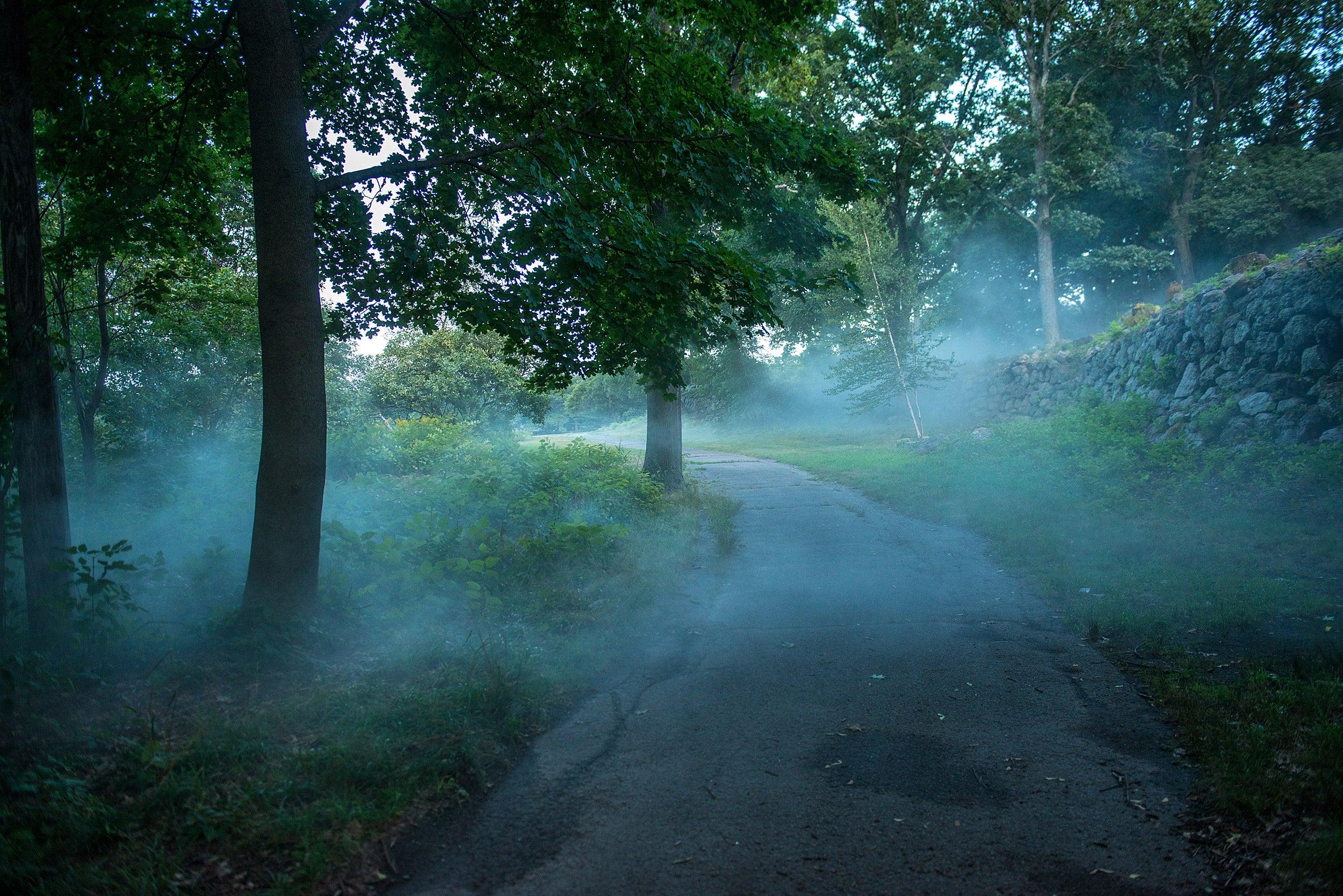 Fujiko Nakaya's Fog x Ruins at Franklin Park.