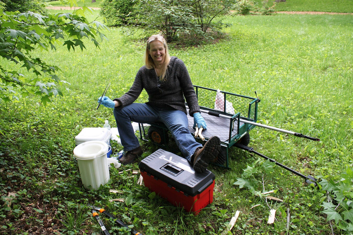 Sue-Arnold: Suzanne Gerttula, research assistant with Andrew Groover, sits on a transport cart with equipment including pole pruners and liquid nitrogen to study a sweetgum (Liquidambar styraciflua) tree. Photo by Andrew Groover