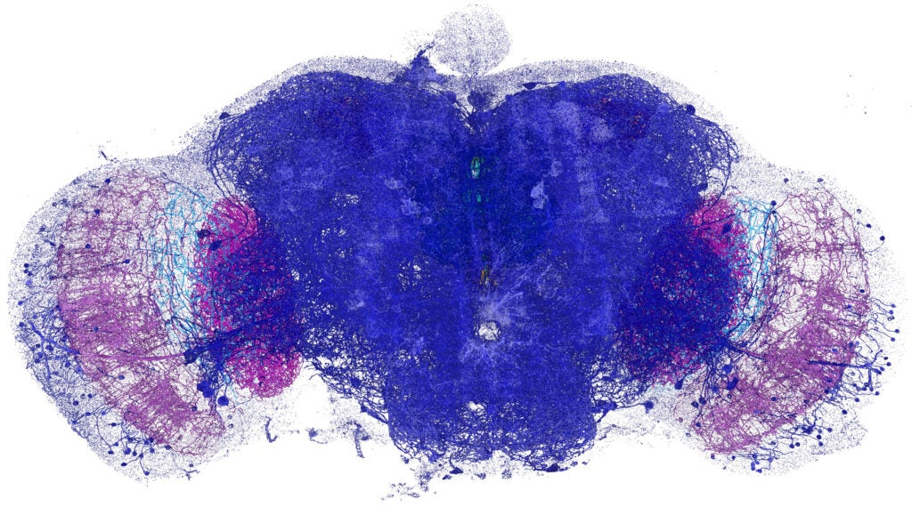 Dopaminergic neurons and associated synaptic proteins across the entire fruit fly brain.