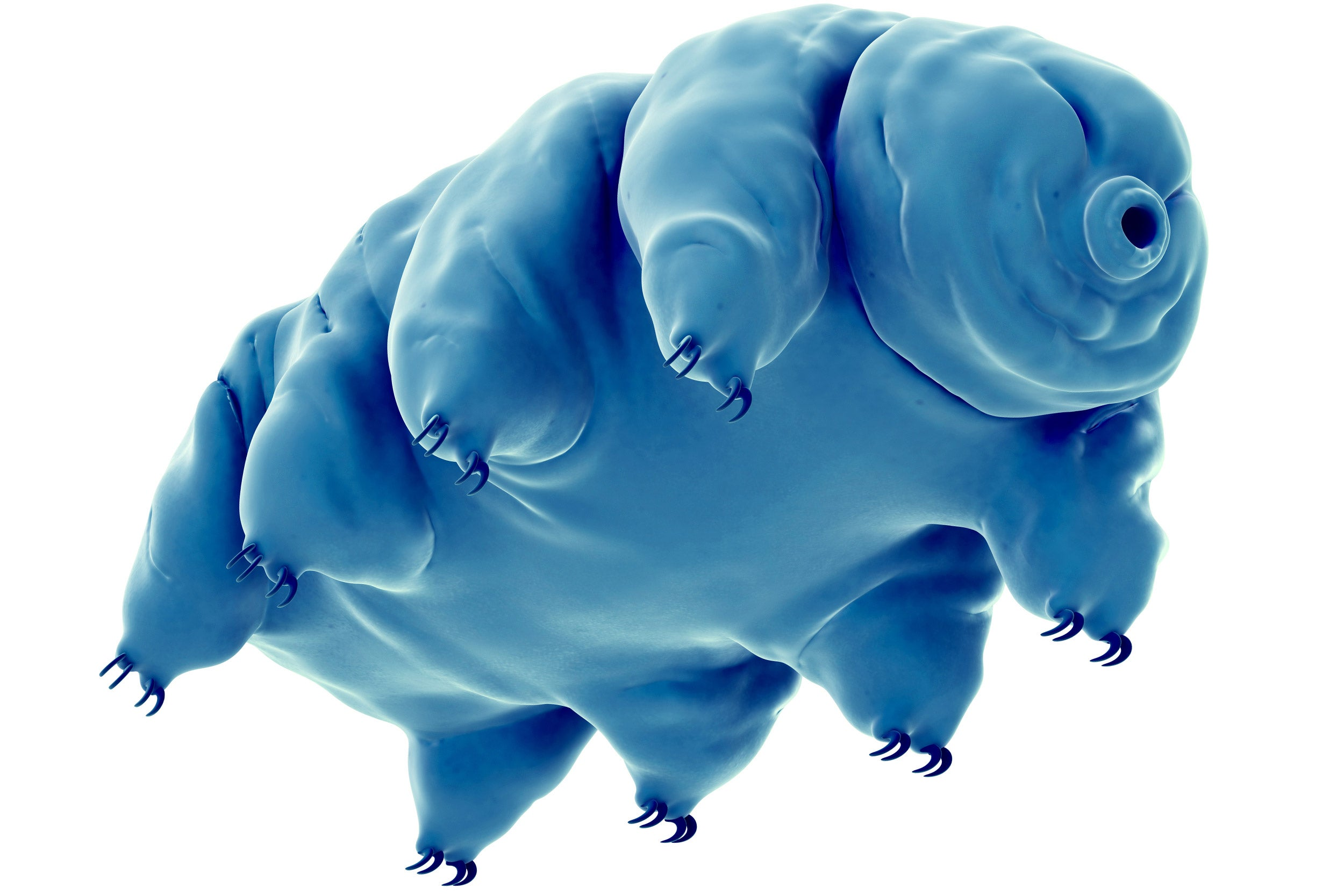 An illustration of a tardigrade, which is capable of withstanding dehydration and cosmic radiation.