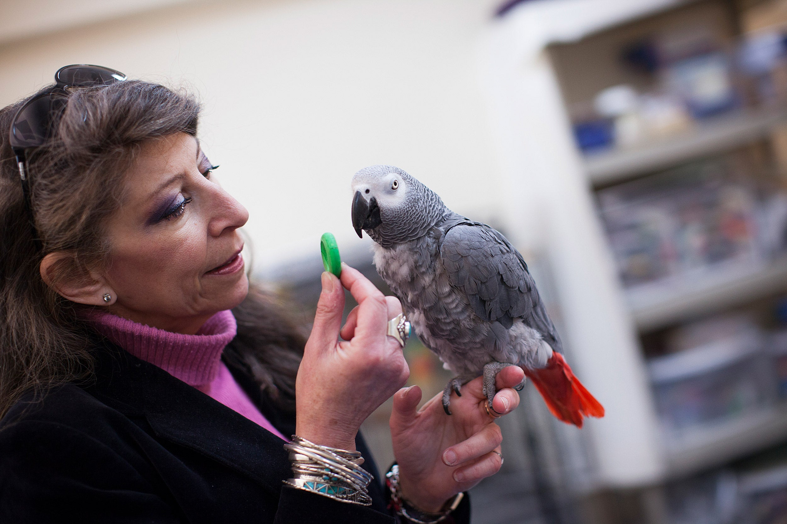 Scientist Irene Pepperberg with African grey parrot, Griffin.