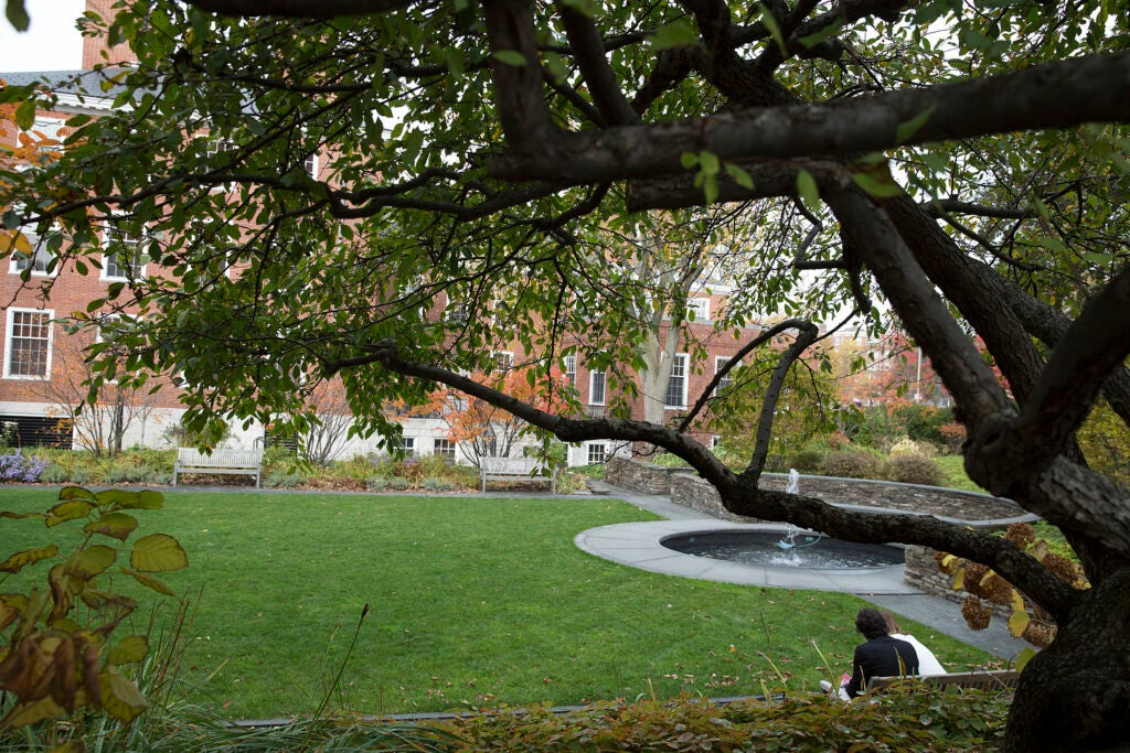 The Sunken Garden in Radcliffe Yard framed by long tree branches.