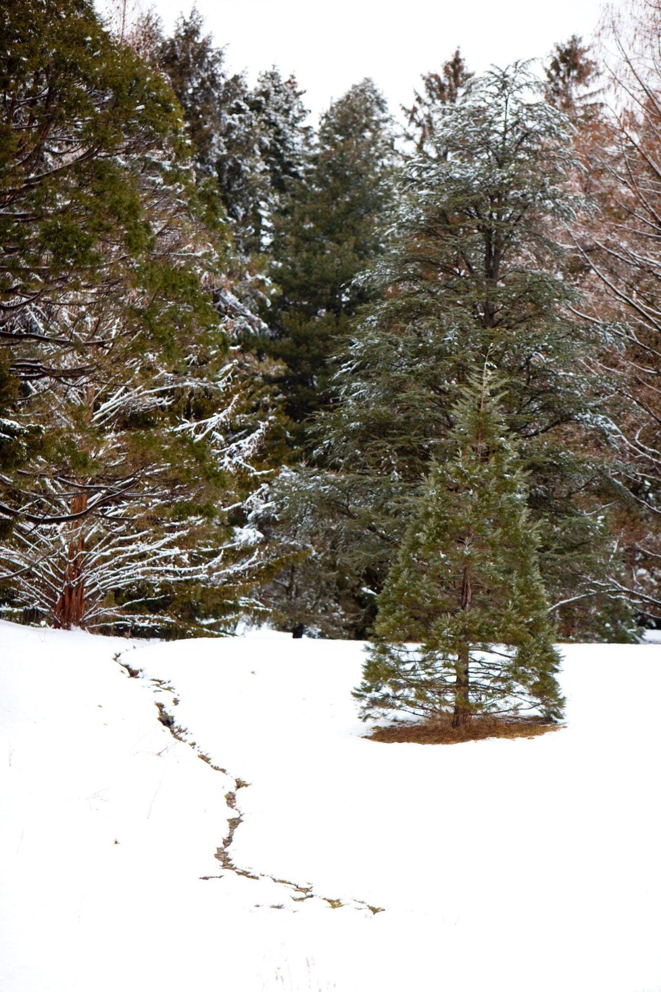 Arboretum blanketed in snow.