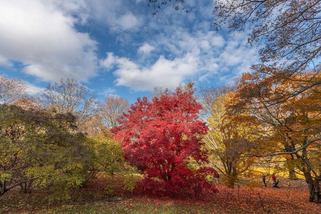 Trees in full autumn splendor.