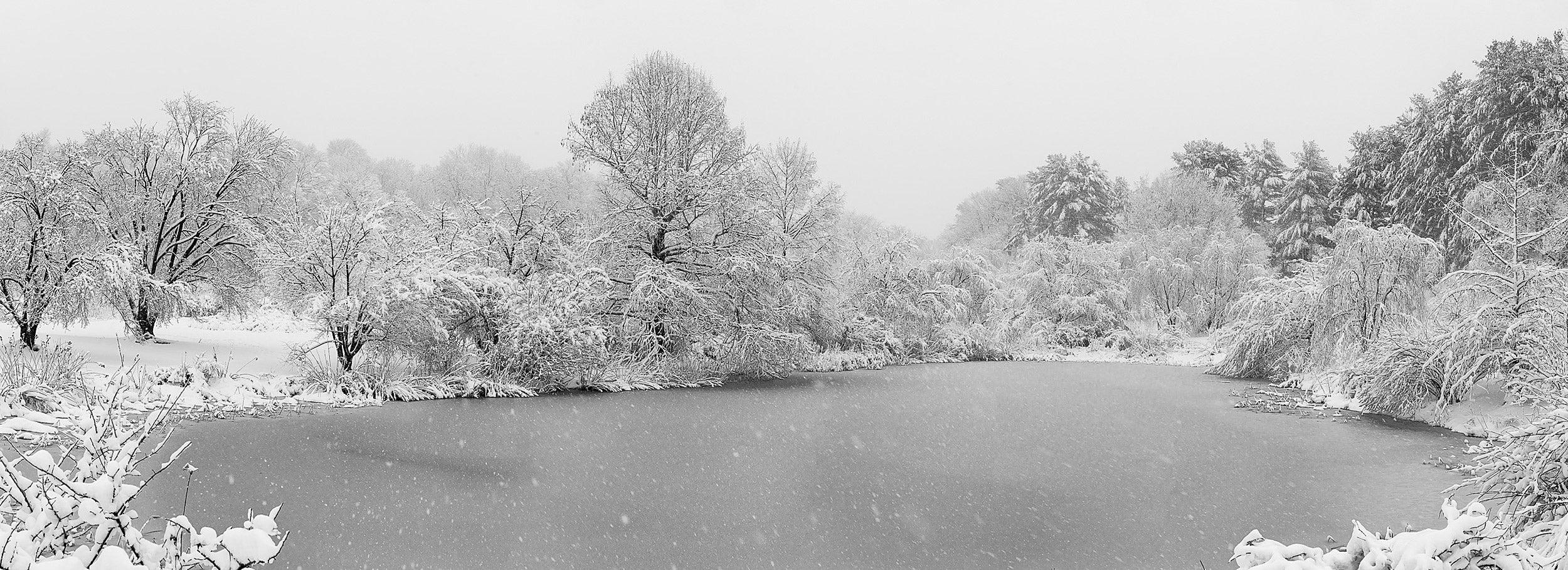 Arnold Arboretum pond during blizzard.