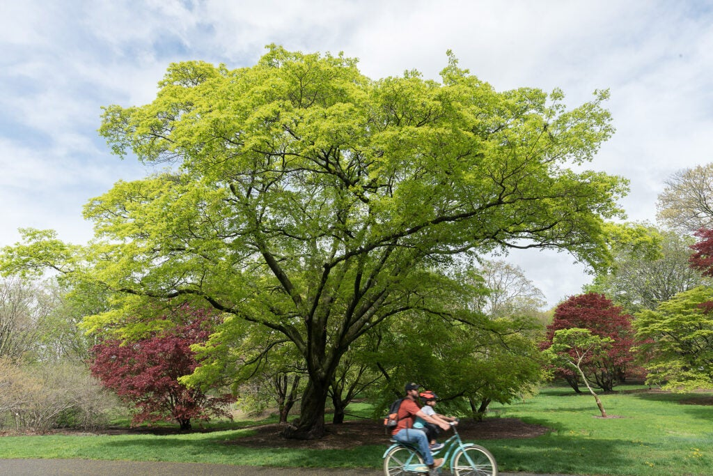 Cyclists pass trees in spring.