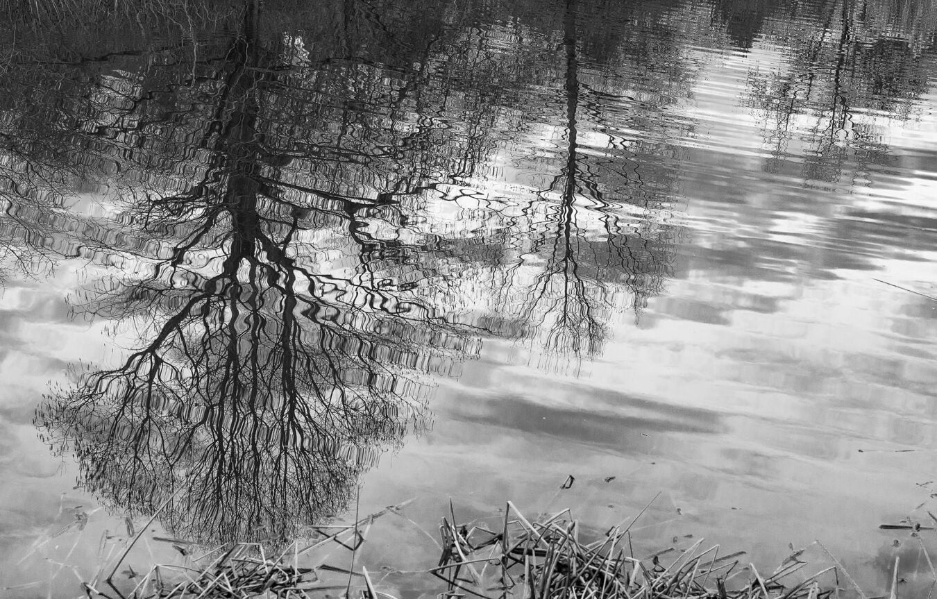 Tree reflections.