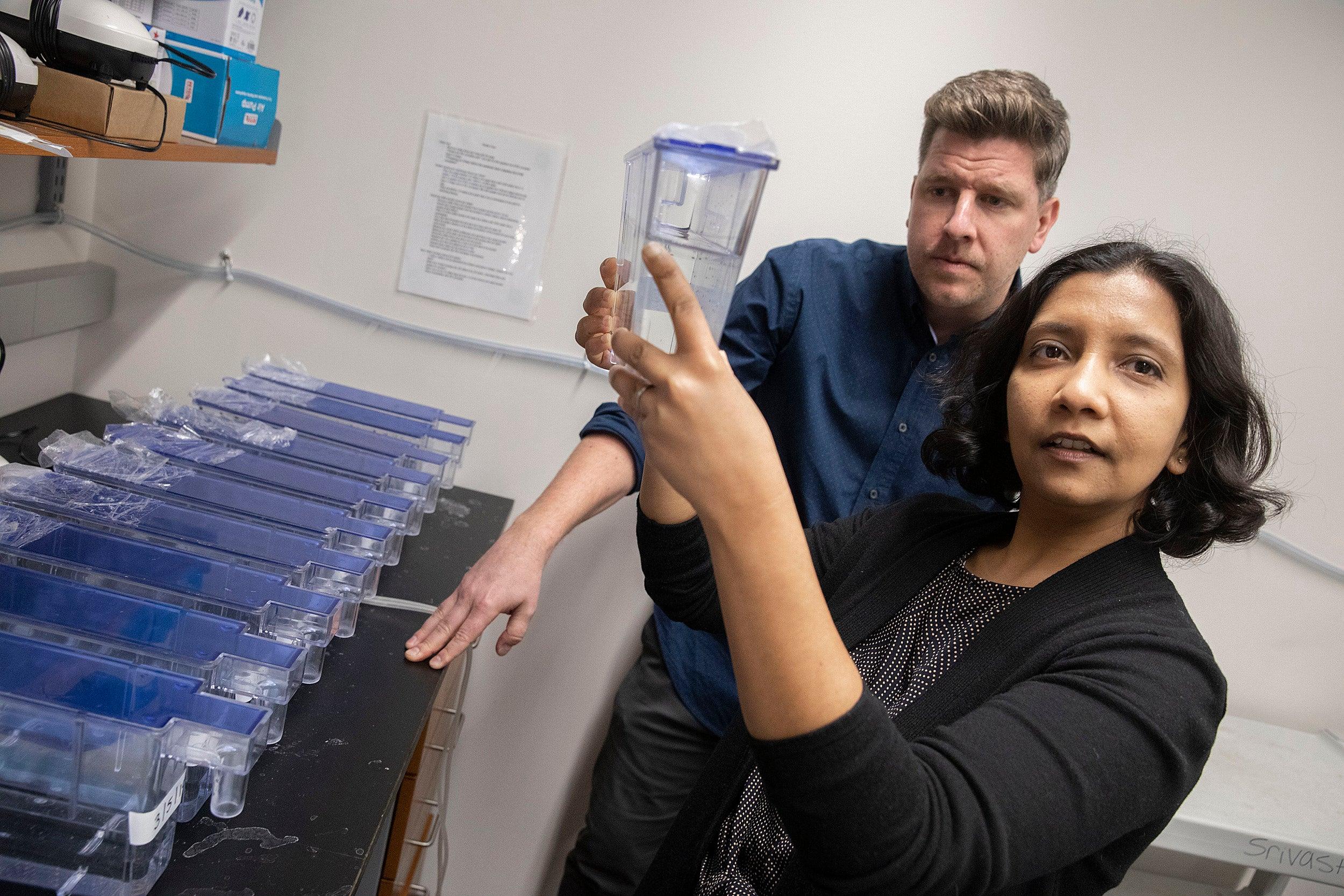 Harvard study unlocks a key to regeneration