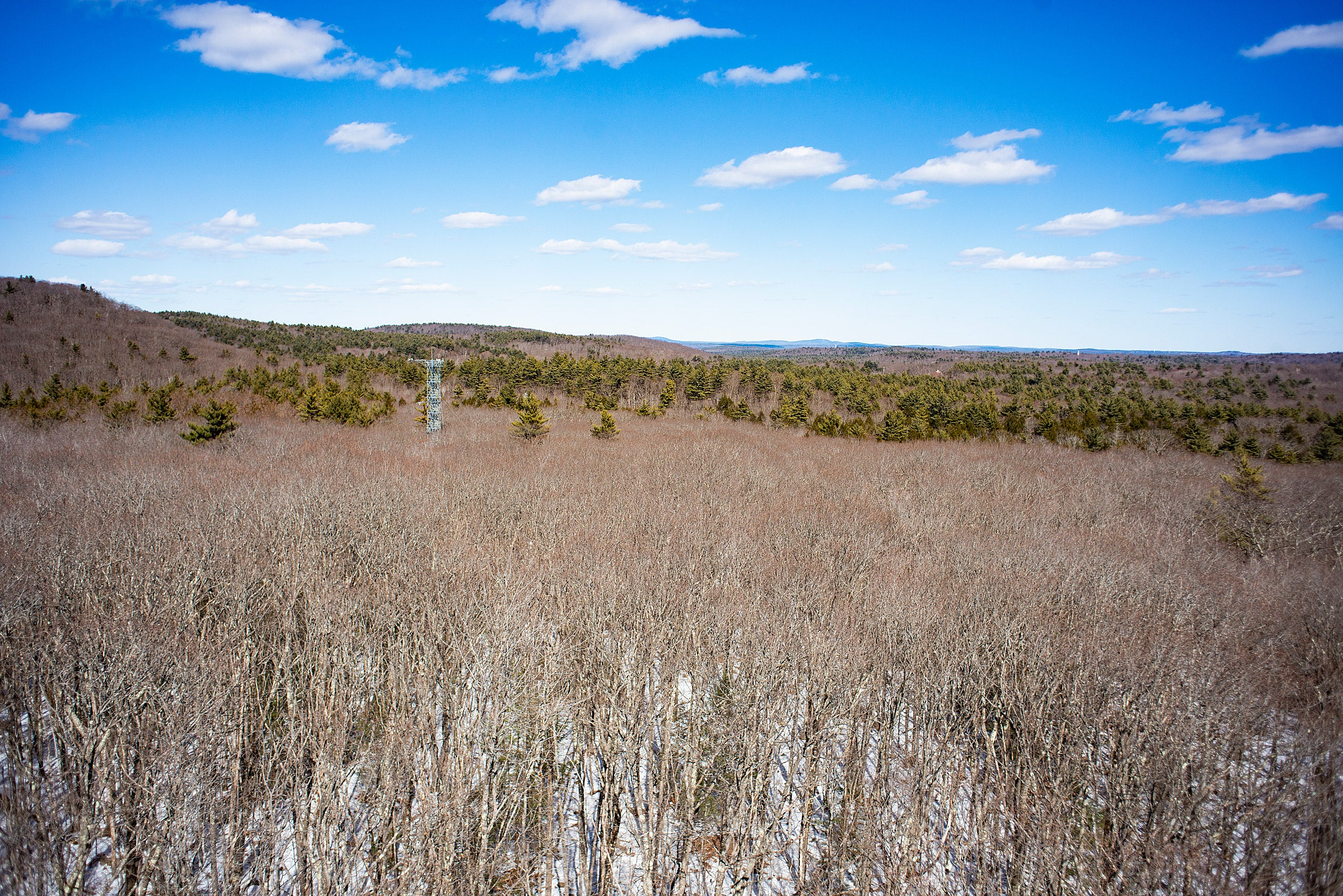 View from tower of Harvard Forest.