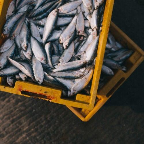 Tub of fish