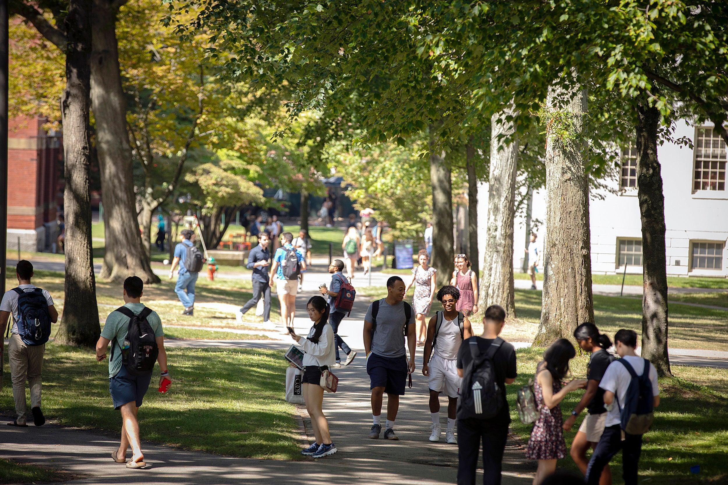 Students walk across Harvard Yard
