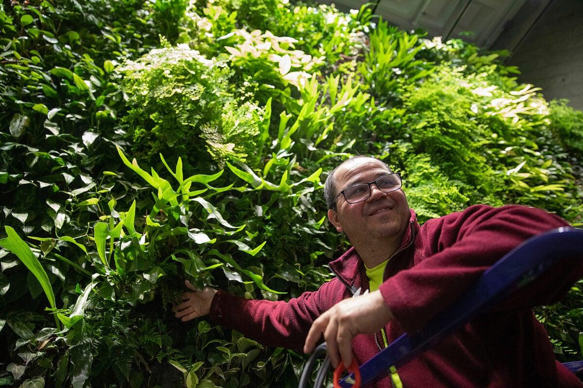 Tiago Pereira tending to the green wall