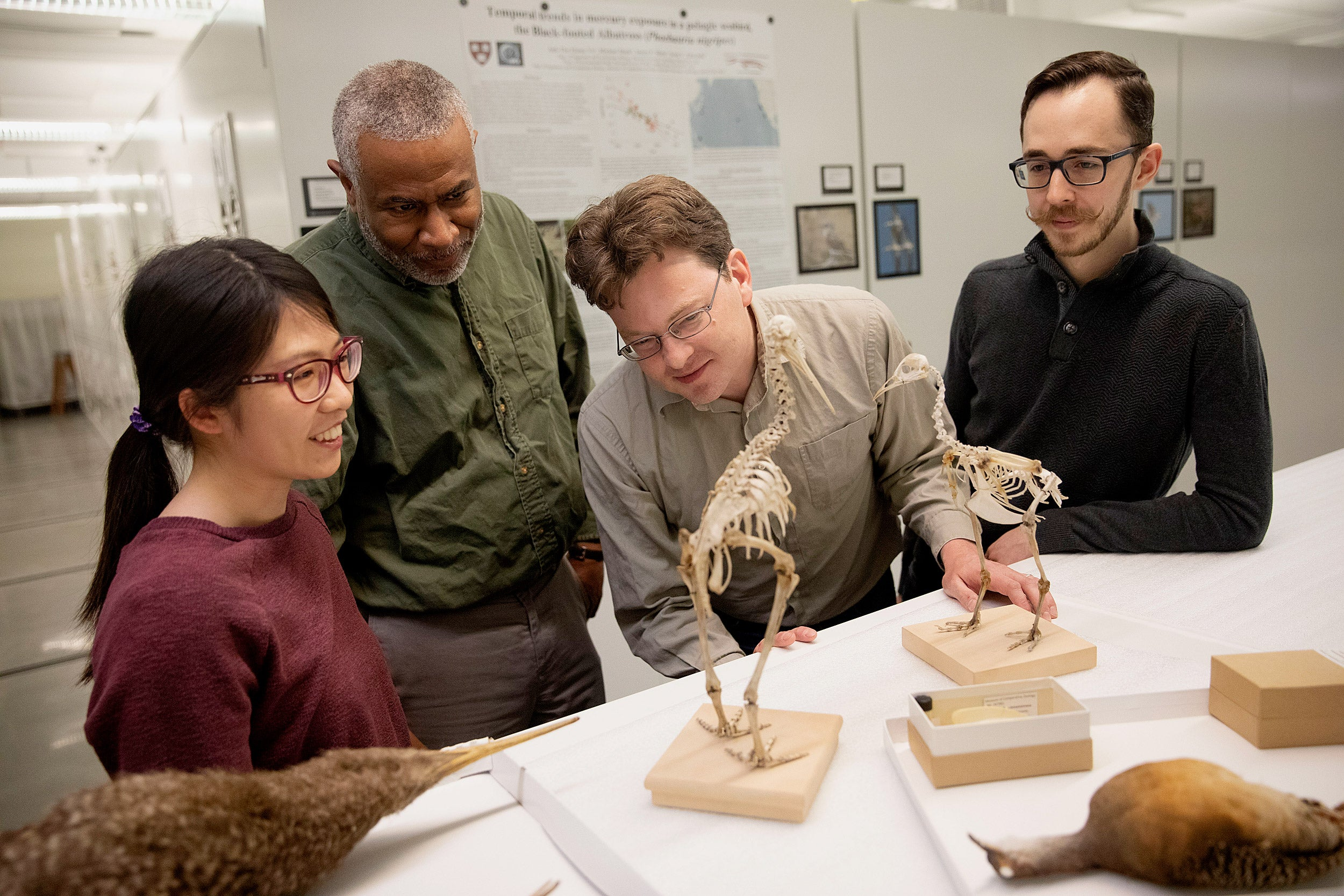 Researchers display skeletons of flightless birds.
