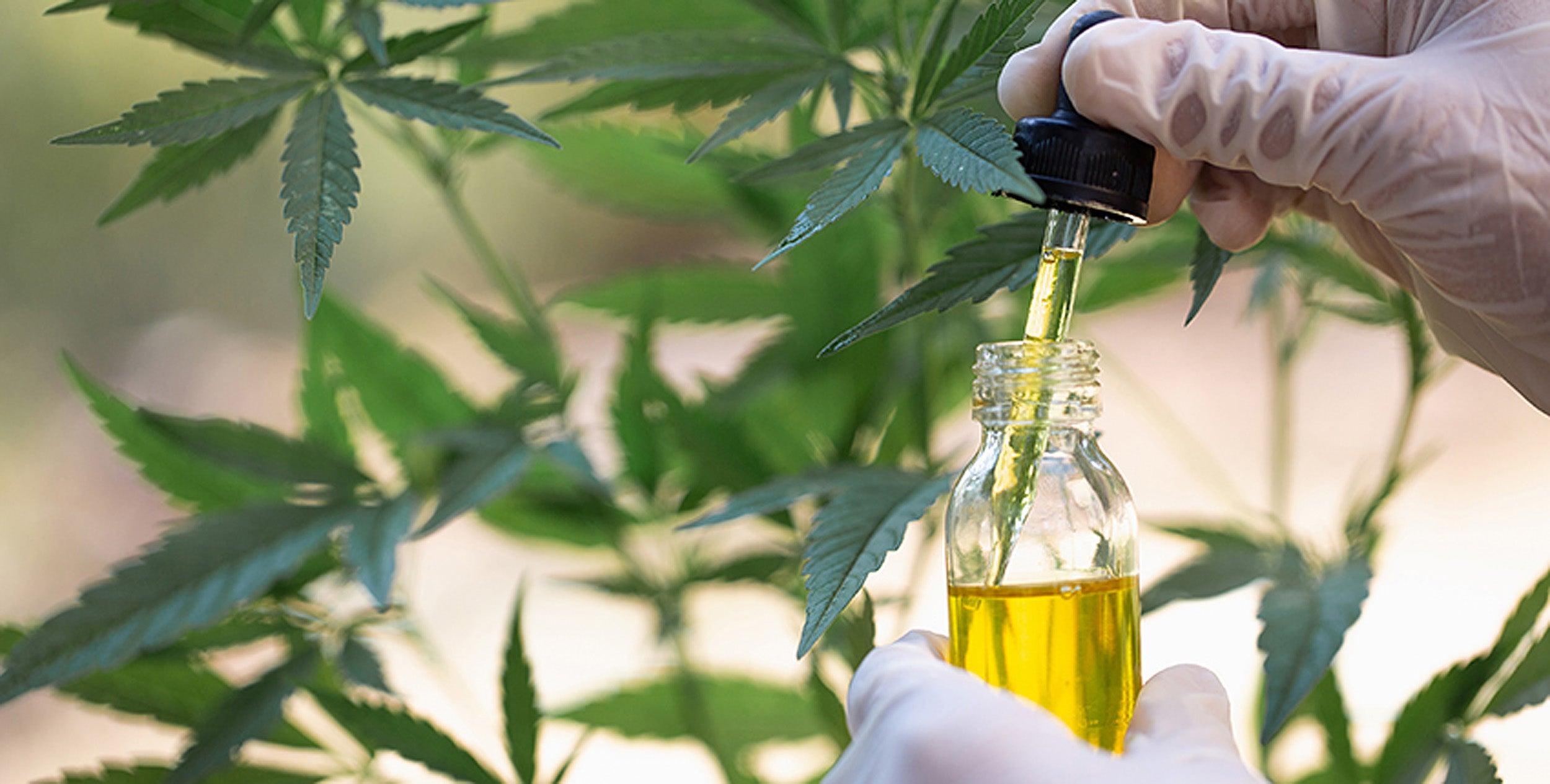 cannabis-85012500.jpg?w=1200&h=800&crop=
