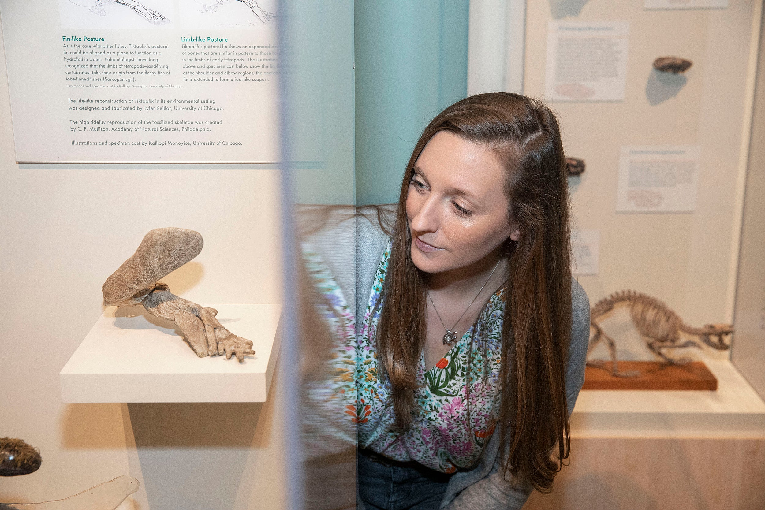 Stephanie Pierce explores the collections of tetrapod fossils inside the Harvard Museum of Natural History.