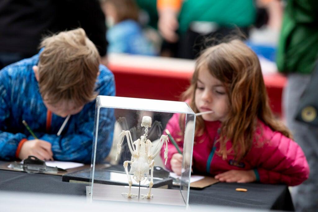 Children draw an animal skeleton.