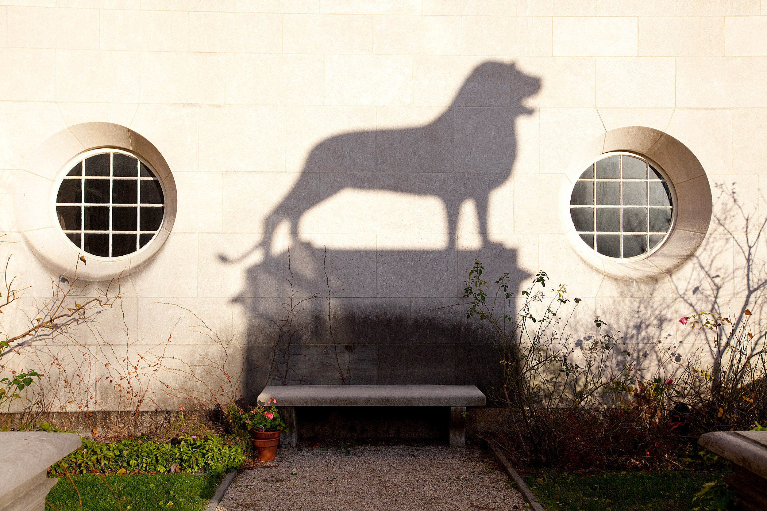 Shadow of bronze lion casts shadow on the wall at Busch Hall garden.
