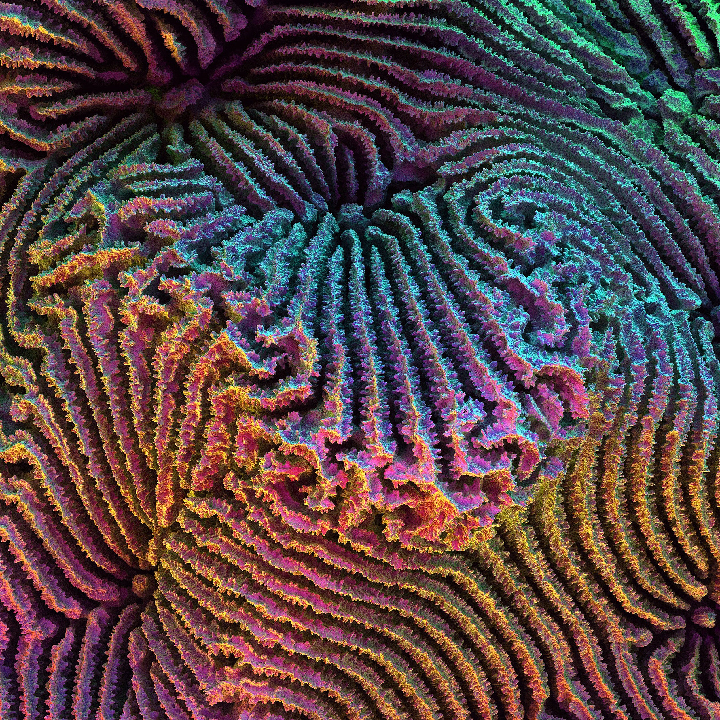 Polychromatic scanning electron micrograph of the skeletal details of the coral, Coscinaraea