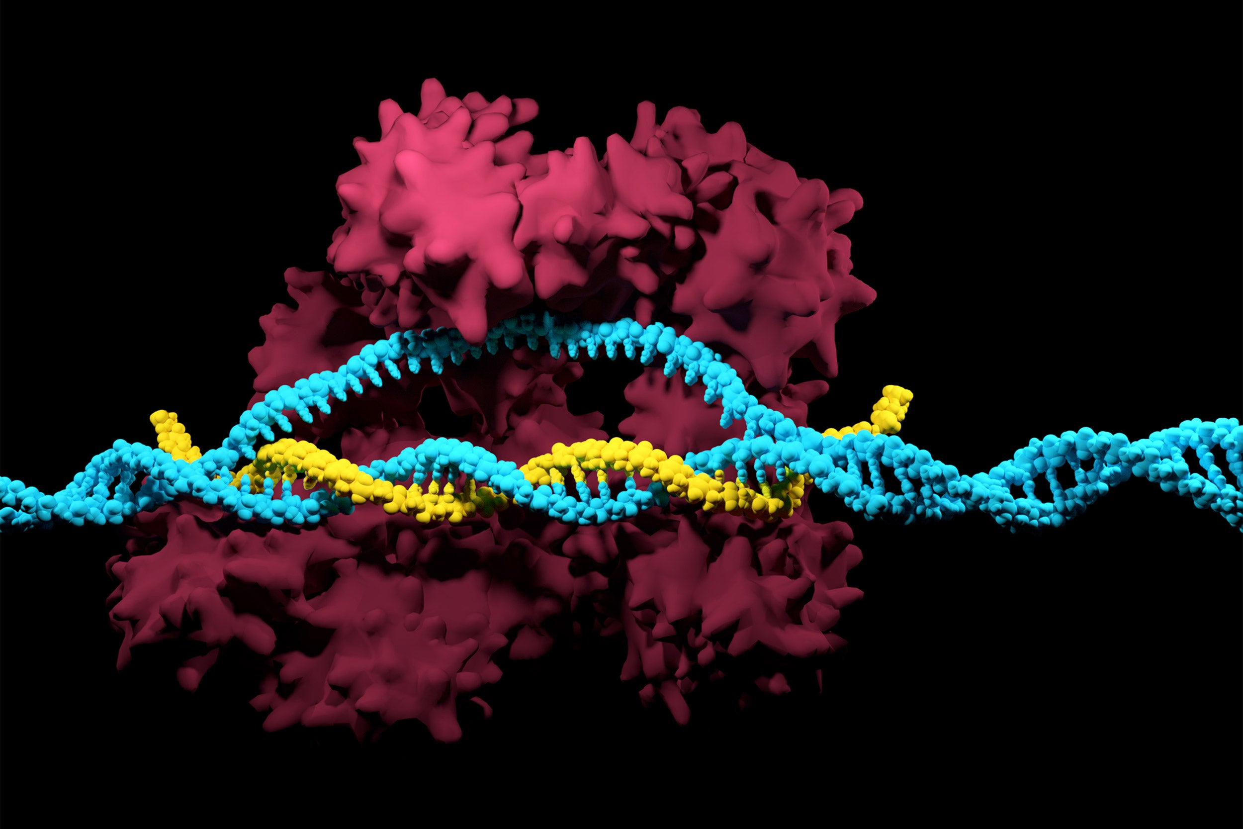 3D render of the CRISPR-Cas9 genome editing system