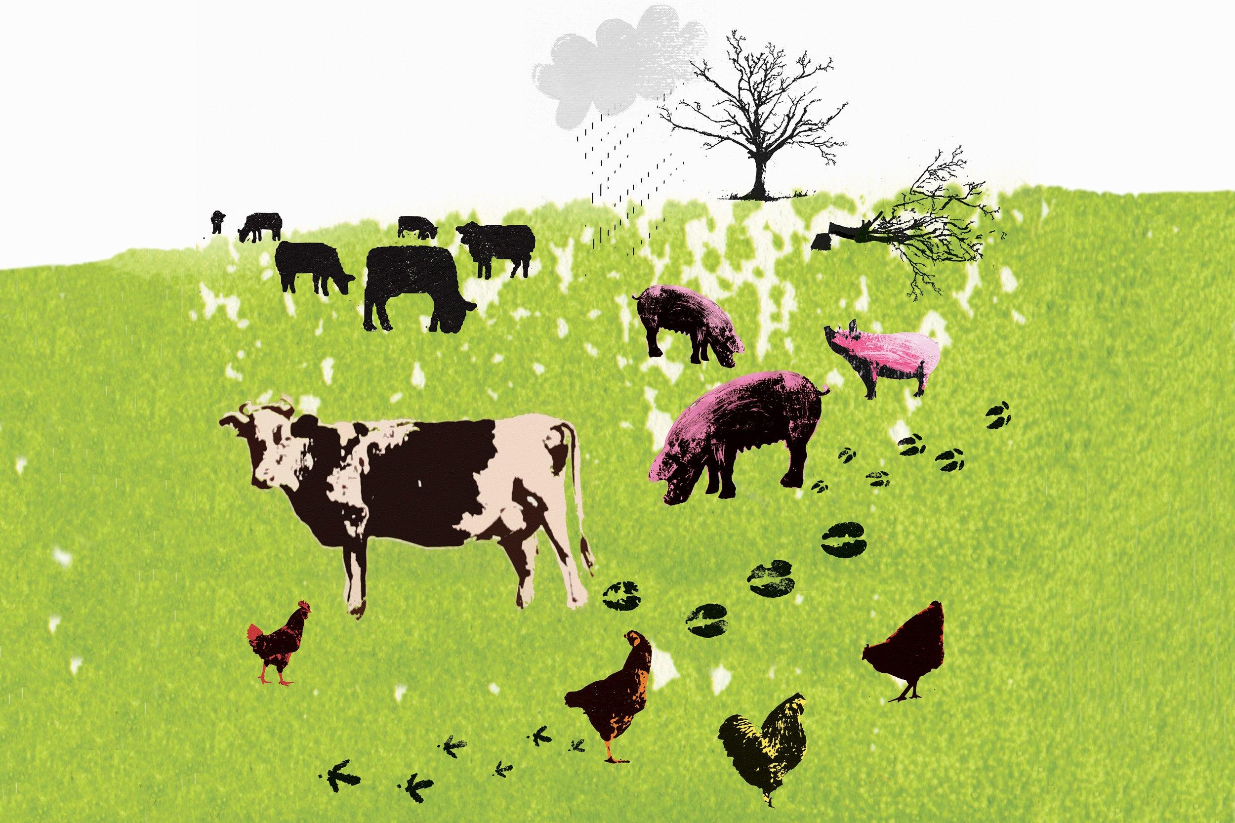 Illustration of farm animals in a field.