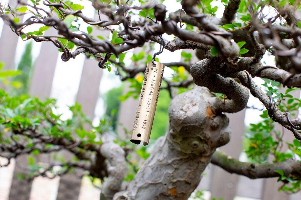 Tag on bonsai tree